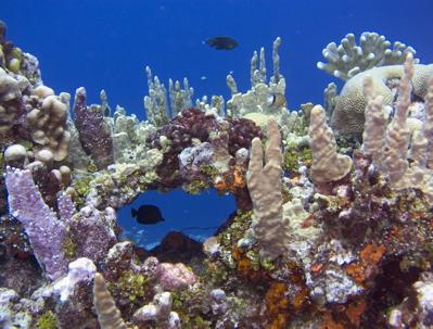 kosrae-reef-world-window-16-32-34
